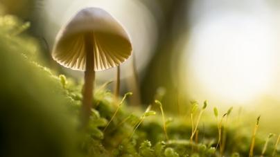 Стартап MycoTechnology сделал универсальный блокатор горечи из грибов