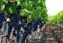 Конференция «Успешное виноградарство в Украине-2016» соберет виноградарей и виноделов в Одессе