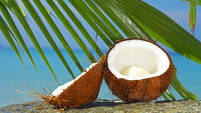 Tetra Pak выпустила «Руководство по производству напитков на основе кокосовых орехов» (Coconut Handbook)