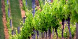 Известная немецкая компания WILLMES на II Всеукраинской конференции «Успешное виноградарство и виноделие — 2017» представит уникальные прессы для переработки винограда