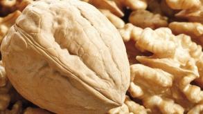 Типовой бизнес-план организации производственного комплекса по выращиванию и переработке грецкого ореха