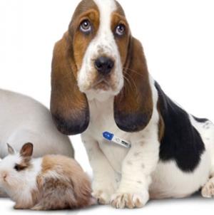Типовой бизнес-план по созданию ветеринарной клиники