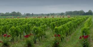 Великі перспективи малих виноробів:  де українським виноробам шукати грошей для розвитку галузі