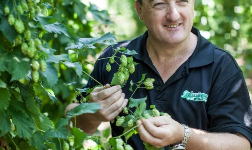 Employee plucking hops-min