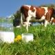 На сайте президента зарегистрировали петицию против антибиотиков в животноводстве