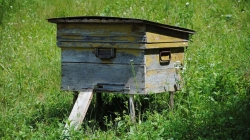 Солодка історія успіху: перша медова аграрна розписка